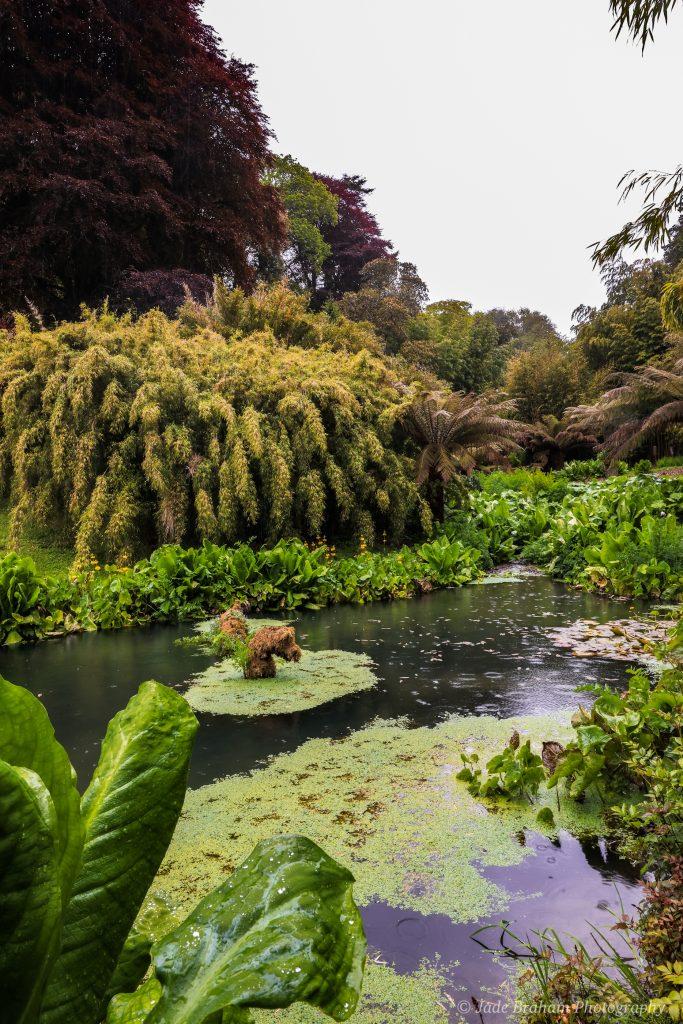 Trebah Gardens' Koi Pool
