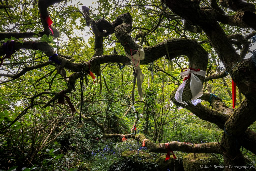 Madron clootie tree at Carn Euny Ancient Village